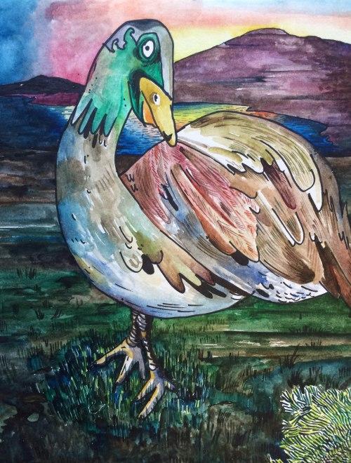 Taswegian Duck